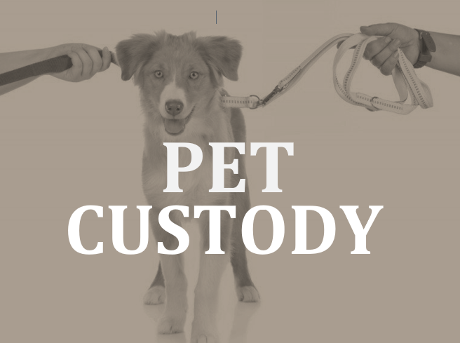 Ottawa lawyer Timothy Sullivan on pet custody