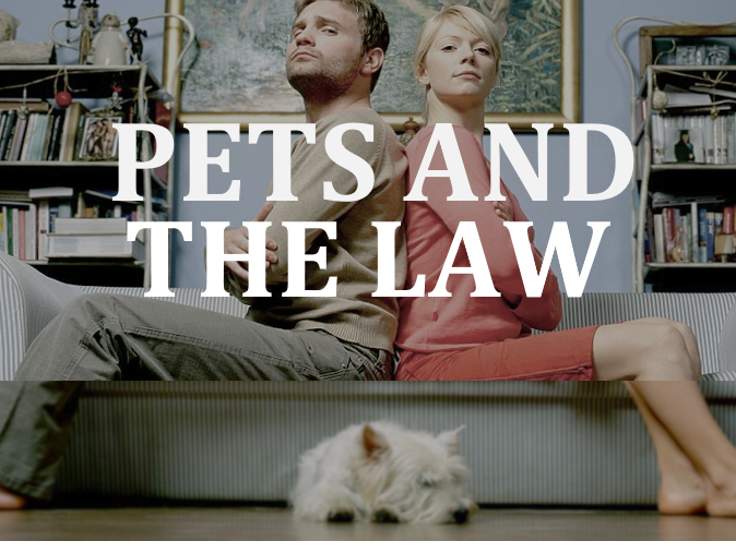 Lawyer Emily Murray reviews the law and pets in Ontario