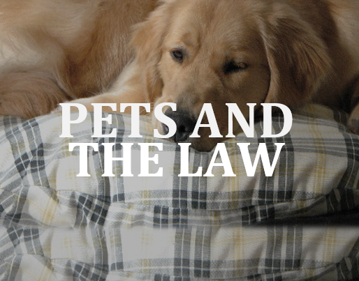 SullivanLaw lawyer Emily Murray on dog liability